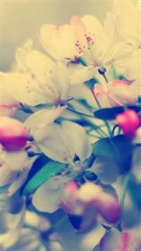 Blossom Branch Flower Glare iPhone 5s wallpaper