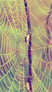 Web Drops Dew Branches iPhone 5s wallpaper