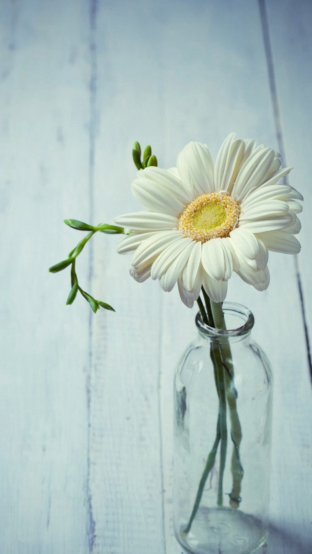 Aesthetic Beauty Daisy Vase Iphone Wallpapers Free Download