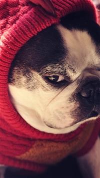 Bulldog Pet Cute Lovely iPhone 5s wallpaper