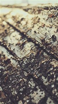 Boat Sunrise Tree Texture Macro iPhone 5s wallpaper