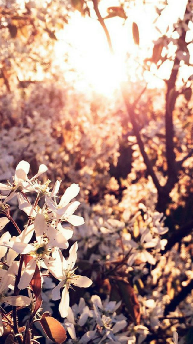 Tree Flower Blossom Spring Nature Iphone Wallpapers Free