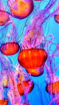 Jellyfish Water Ocean Red Blue iPhone 5s wallpaper