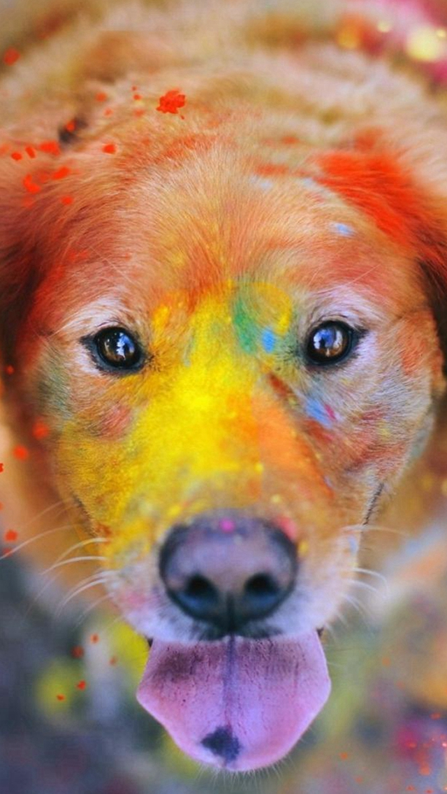 Colorful Paint Giant Dog Animal iPhone wallpaper