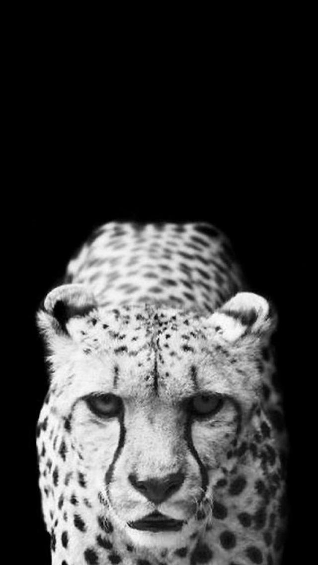 Best Leopard Iphone Wallpapers Hd Ilikewallpaper
