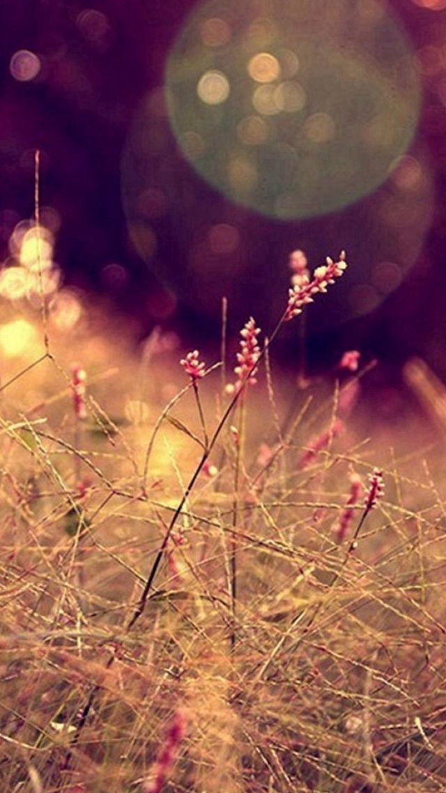 Nature Grass Lawn Flare Scenery iPhone wallpaper