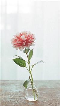 Nature Pure Elegant Flower Vase Indoors Curtains Decorations iPhone 5s wallpaper