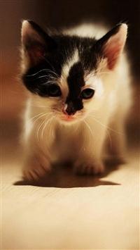 Cute Walking Speckle Little Kitten Cat iPhone 5s wallpaper