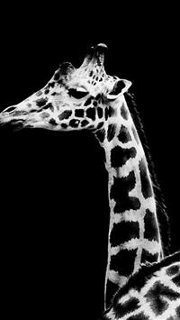 Dark Simple Giraffe Animal iPhone 5s wallpaper
