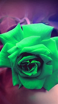 Green Rose Nature Flower Wood Love Valentine Flare iPhone 5s wallpaper