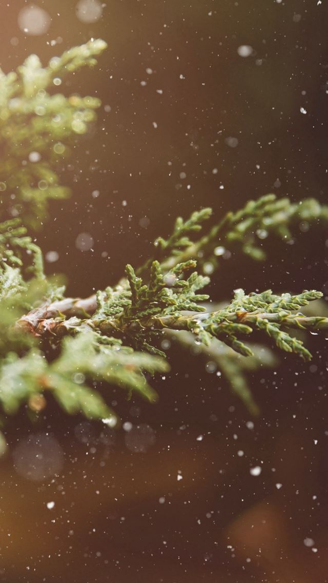 Branches Snow Flare Leaves iPhone wallpaper