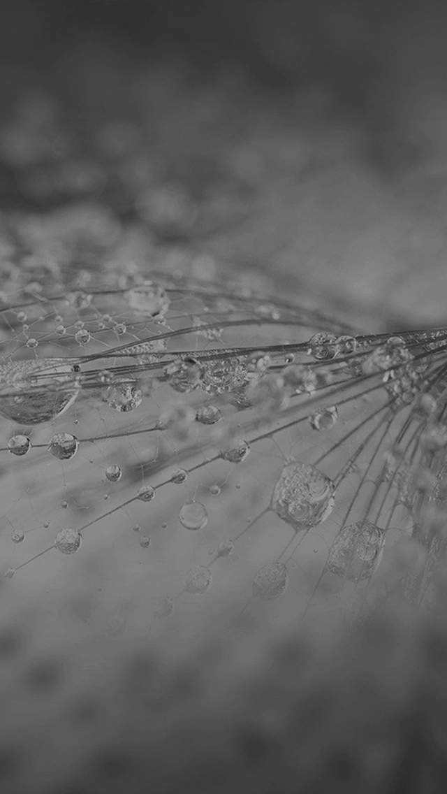 Nature Rain Drop Flower Dark Bw Pattern iPhone wallpaper