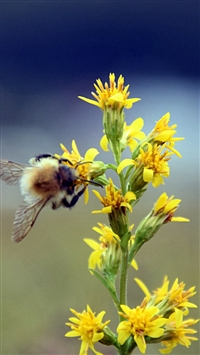 Bumble Bee Flower Insect Blur iPhone 5s wallpaper