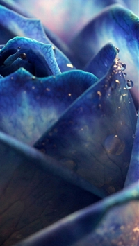 Blue Dew Rose Bloomy Bud Macro iPhone 5s wallpaper