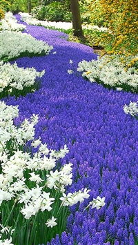Nature Purple And White Flowers Field iPhone 5s wallpaper