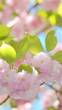 Pure Sunny Beautiful Flowers Branch iPhone 5s wallpaper