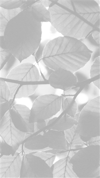 Tree Blossom Nature Leaf Green White Bw iPhone 5s wallpaper
