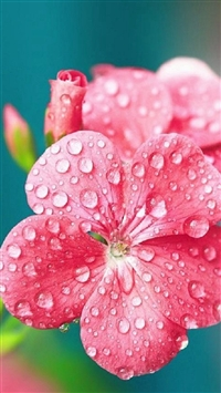 Pure Dew Wet Wild Flower Macro iPhone 5s wallpaper