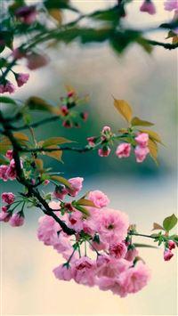 Nature Spring Plum Branch Bokeh Blur iPhone 5s wallpaper