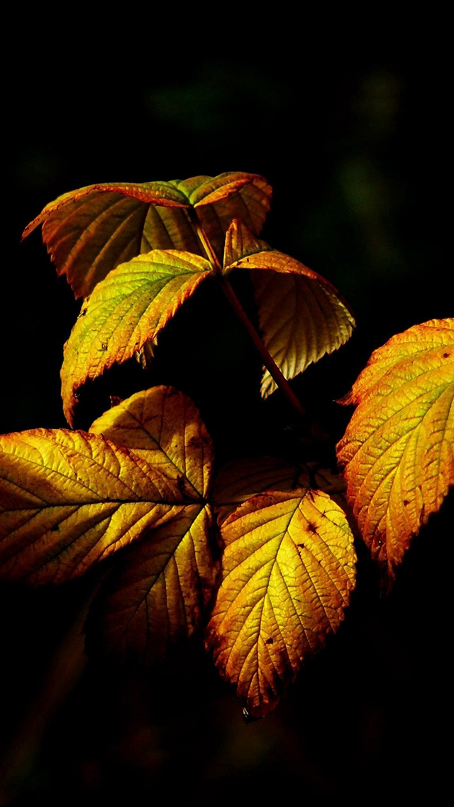 Fall Leaf Dark Nature Iphone Wallpapers Free Download