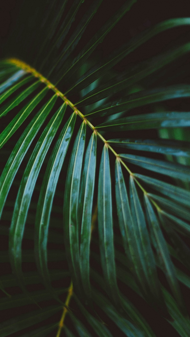 Palm Frond Leafy Branch iPhone wallpaper
