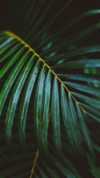 Palm Frond Leafy Branch iPhone 5s wallpaper