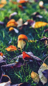 Fall Leaf Nature Green Backyard Blue Dark iPhone 5s wallpaper