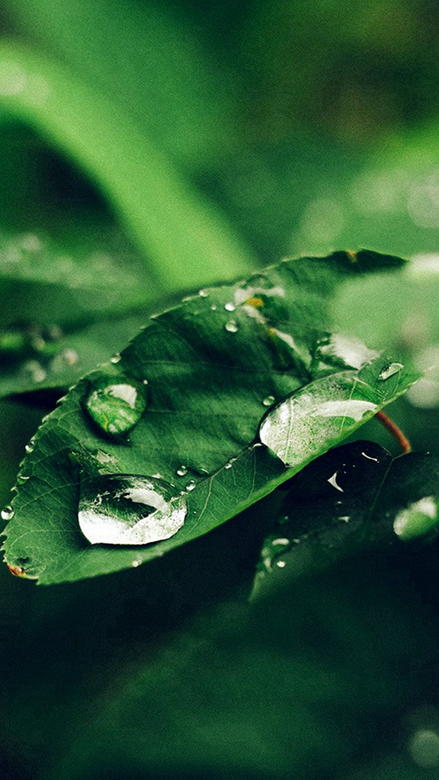 Leaf Rain Green Nature Forest Blue iPhone wallpaper