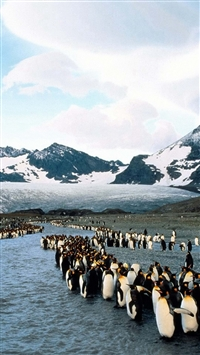 Penguins North Mountains Flock Colony iPhone 5s wallpaper