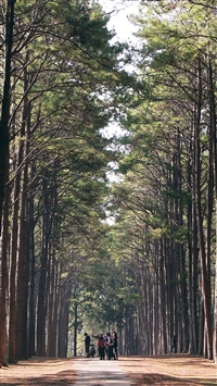 Wood Wild Road Healing Nature iPhone 5s wallpaper