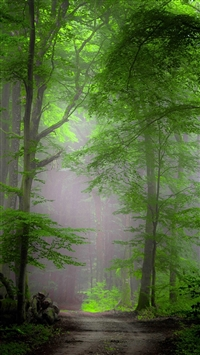 Forest Morning Mist iPhone 5s wallpaper