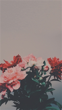 Peony Flowers Bouquet iPhone 5s wallpaper
