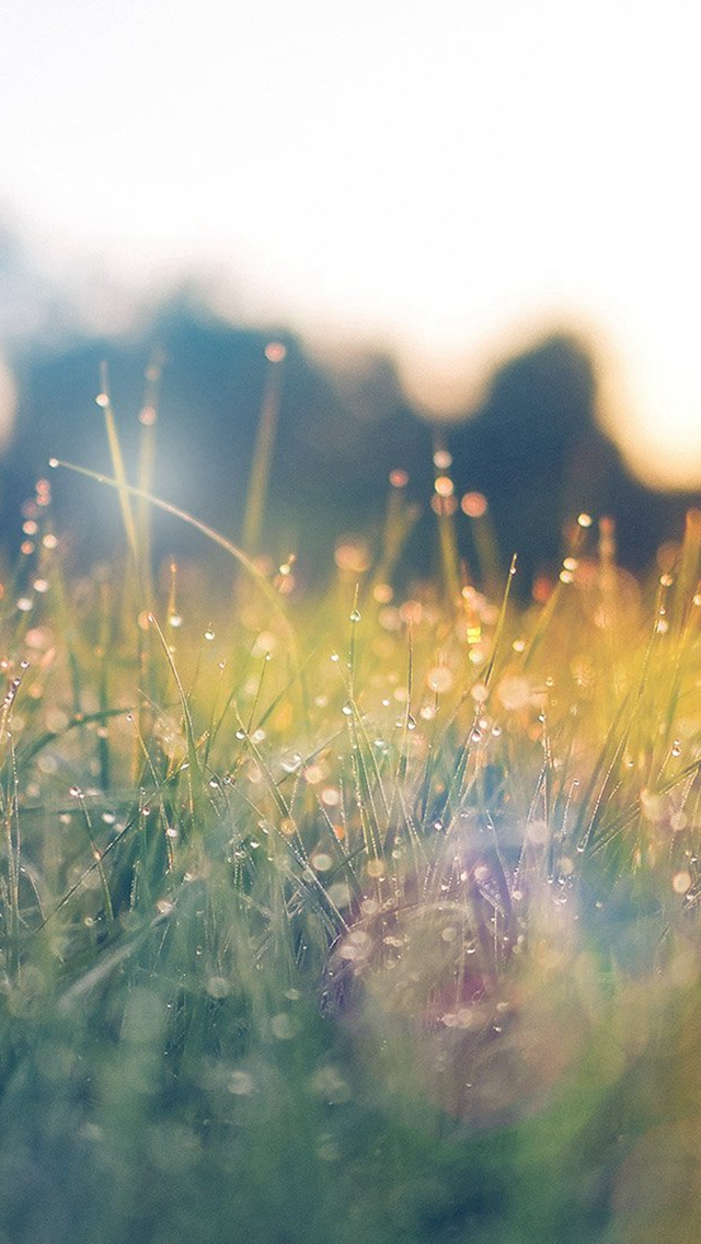 Lawn Green Nature Sunset Light Bokeh Spring Flare Happy iPhone wallpaper