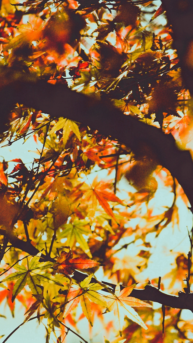 Fall Tree Leaf Autumn Nature Mountain Iphone Wallpapers Free