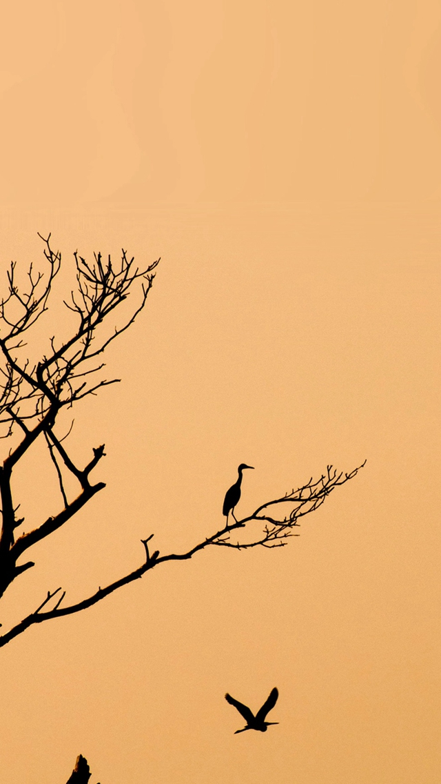 Minimal Tree Birds Sunset iPhone wallpaper