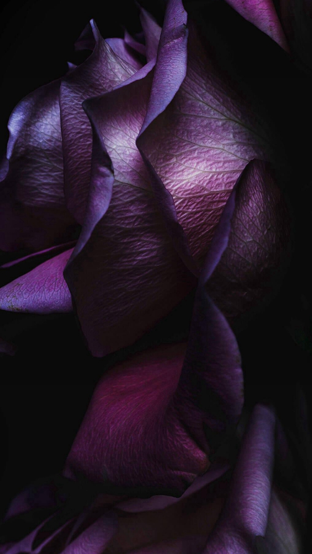 Noble Elegant Dark Rose Petal Macro iPhone wallpaper