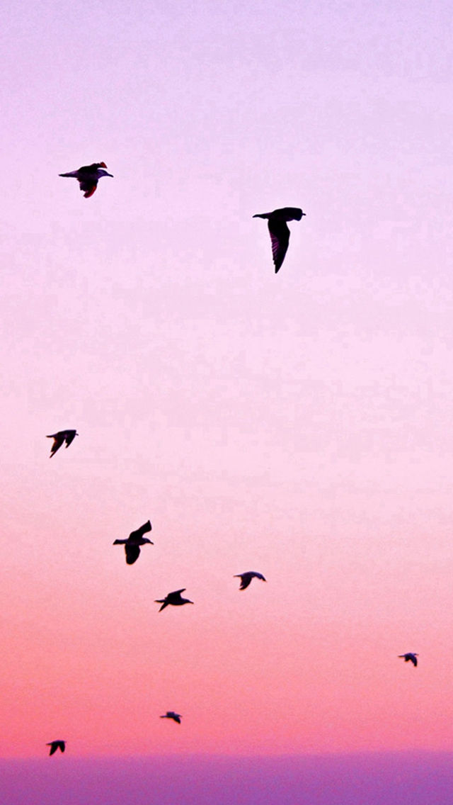 Birds Flying In Purple Sunset Iphone Wallpapers Free Download