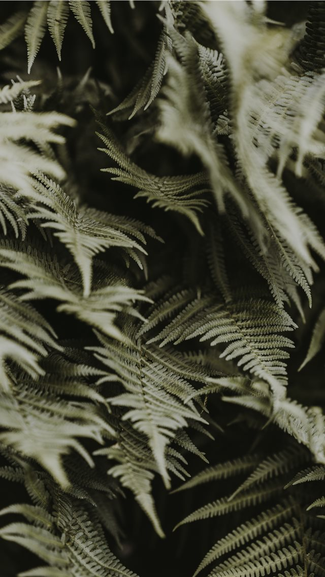 Green Ferns Iphone Wallpapers Free Download