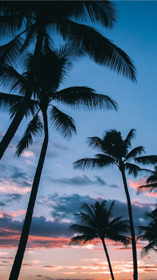 Palm Trees in Paradise iPhone wallpaper