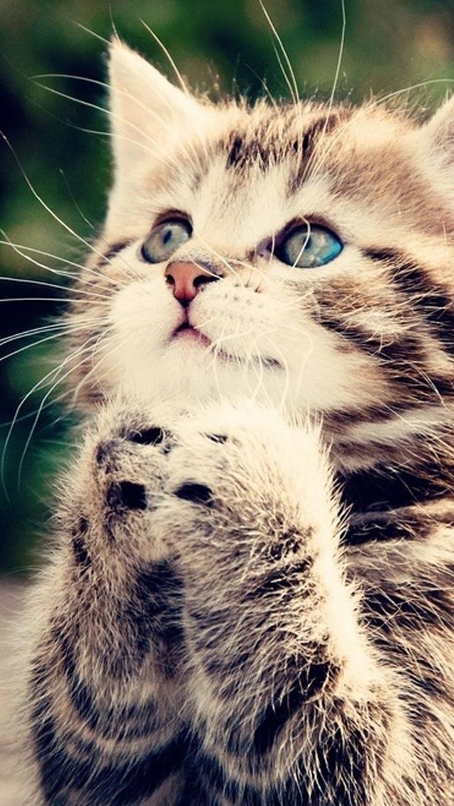 Praying Kittens iPhone wallpaper