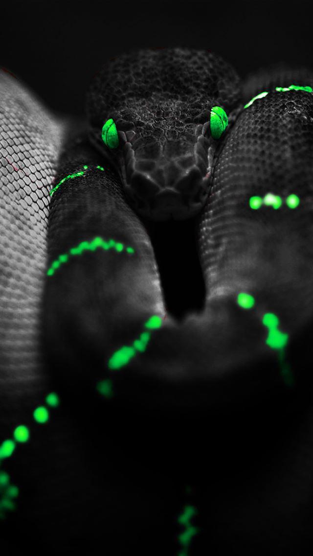 Dark Snake Iphone Wallpapers Free Download