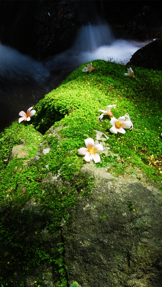 Wildflowers iPhone wallpaper