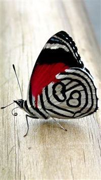 Butterfly iPhone 5s wallpaper