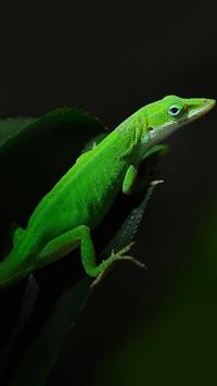 Green Lizard iPhone 5s wallpaper