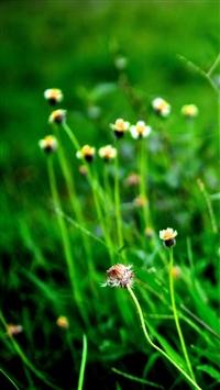 Fild of Wildflowers iPhone 5s wallpaper