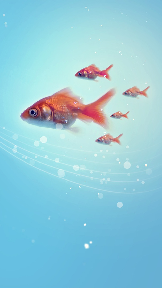 Goldfish Iphone Wallpapers Free Download