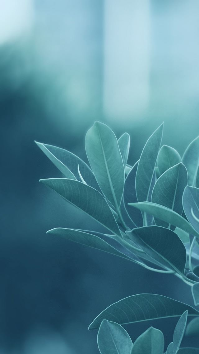 Green Leaves Iphone Wallpapers Free Download