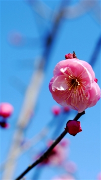 Pink Flower iPhone 5s wallpaper