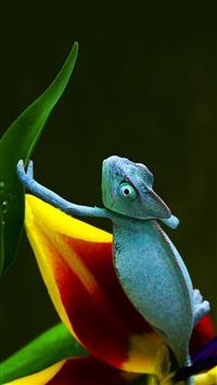 Blue Chameleon iPhone 5s wallpaper