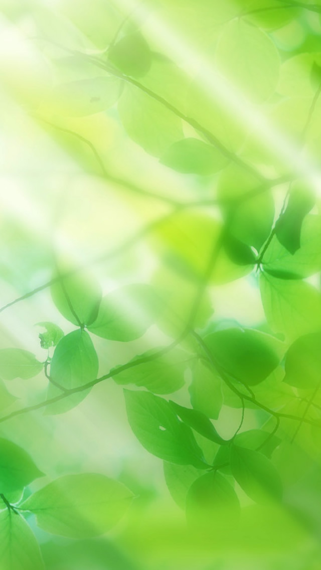 Green leaves and sun ray iPhone wallpaper